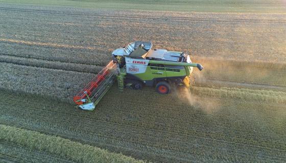 Getreideernte 4