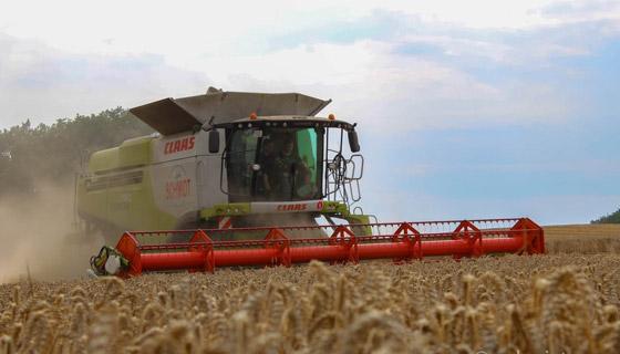 Getreideernte 6